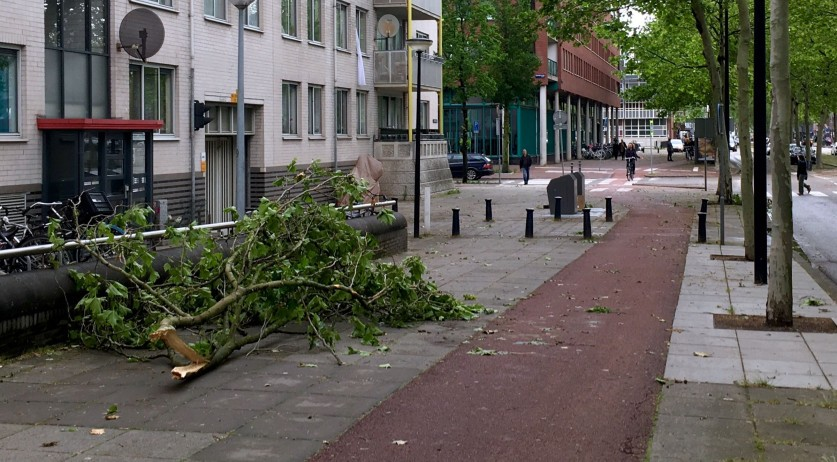 Fallen tree branches in Amsterdam Oost after a thunderstorm, 6 June 2019