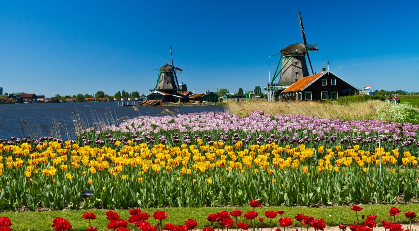 Windmills and flowers