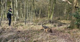 Police officer and sniffer dog search a wooded area