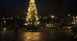 Christmas tree in Havelte
