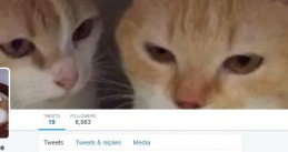 Twitter account for Geert Wilders' cats