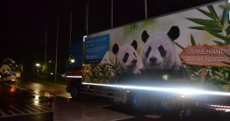 Pandas Xing Ya and Wu Weng on their way to their new home at Ouwehands Zoo in Rhenen, 12 Apr 2017