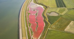 Lake Wagejot on Texel turns pink due to drought combined with algae, Jul 2017