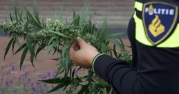 Police officer holding a cannabis plant