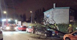 Blown down tree lands on a car in Rotterdam, 3 Jan 2017
