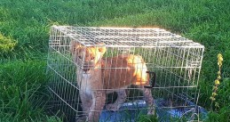 Lion cub found dumped in a meadow in Tienhoven, 7 Oct 2018