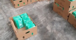 1,500 kilos of cocaine found hidden in a banana shipment at the port of Antwerp, 15 March 2019