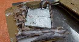 Rotterdam police find 1,125 kilos of cocaine hidden in a shipment of frozen fish from Ecuador, 6 July 2018
