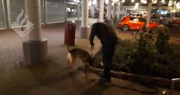 A police dog searches for clues after a shooting in Dordrecht