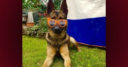 A police dog celebrating King's Day at home. April 27, 2020