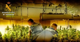 The Spanish police seized 1 ton of cannabis and 580 marijuana plants when busting a gang suspected of trafficking drugs to the Netherlands, May 2020