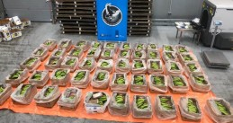 A shipment of bananas from Ecuador was used to conceal €56 million in cocaine. Aug. 4, 2020